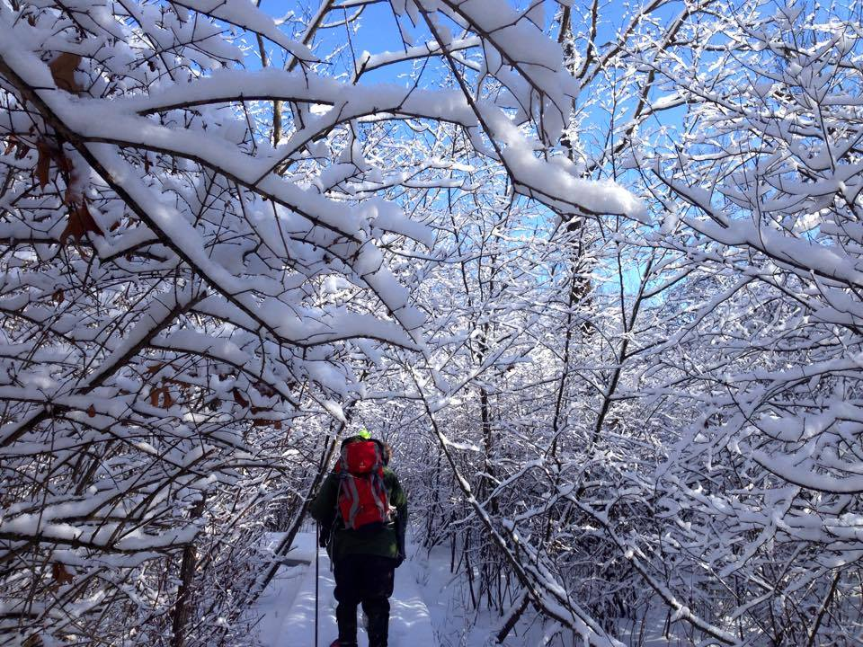 Hikers traverse a snowy trail under snow covered branches