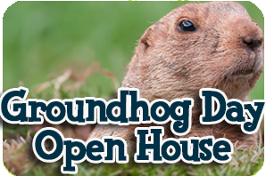 Groundhog popping out of hole in ground