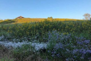 wildflowers in foreground with visitor center building at top of hill