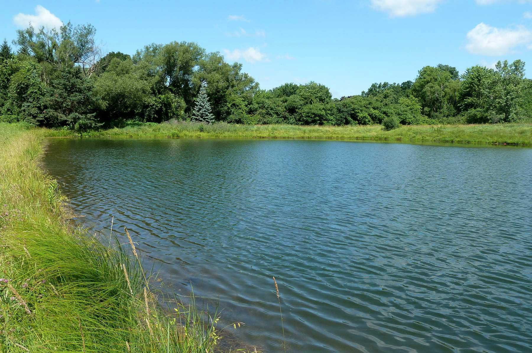 Fishing Pond and Trees
