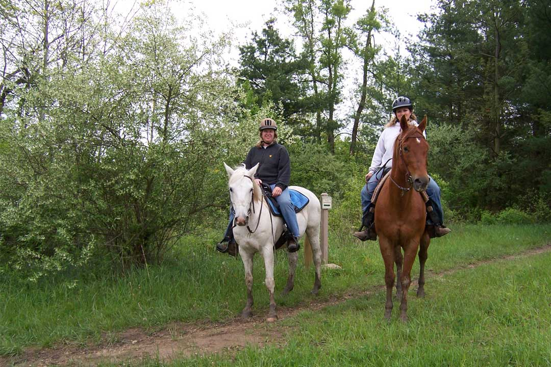 Horses on Trail