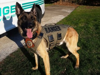 K-9 Gunnar with new vest