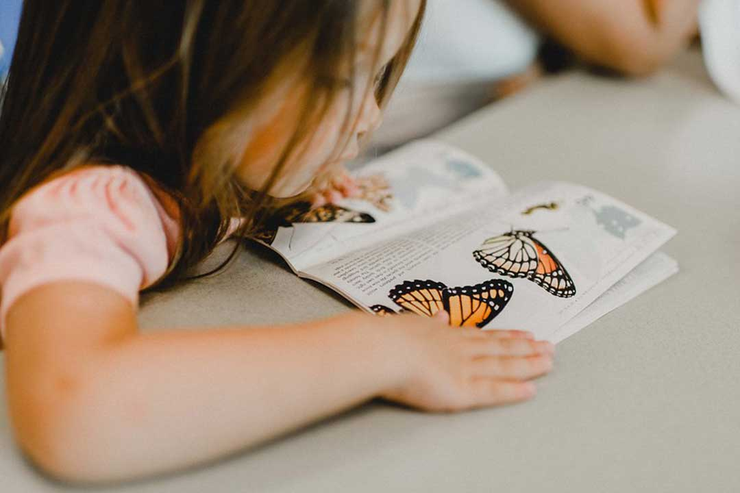Student reading butterfly guide